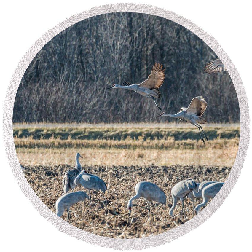 Bird Round Beach Towel featuring the photograph Sandhill Crane Series #3 by Patti Deters