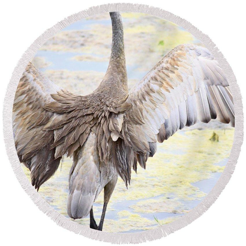 Sandhill Crane Round Beach Towel featuring the photograph Sandhill Crane Wings by Carol Groenen
