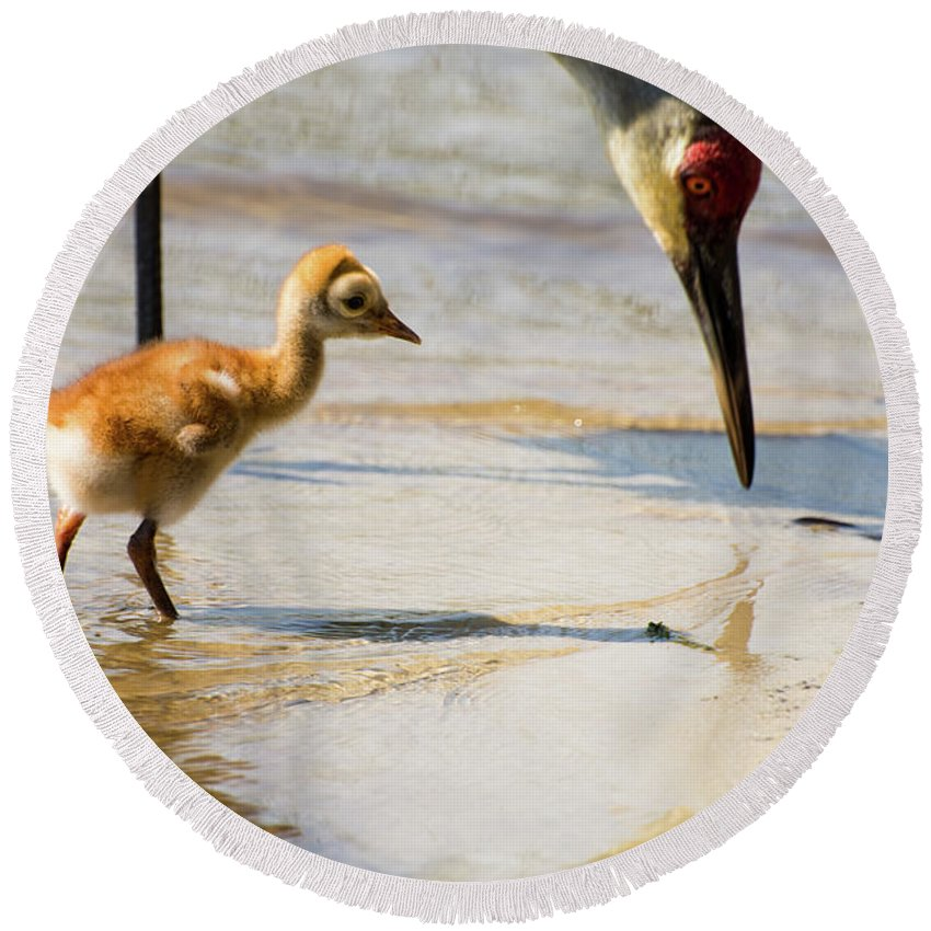 Sandhill Cranes Round Beach Towel featuring the photograph Sandhill Crane With Chick by Zina Stromberg