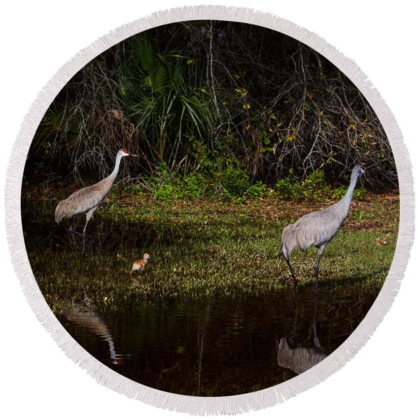 Sandhill Cranes Round Beach Towel featuring the photograph Sandhill Cranes And Chicks by Zina Stromberg