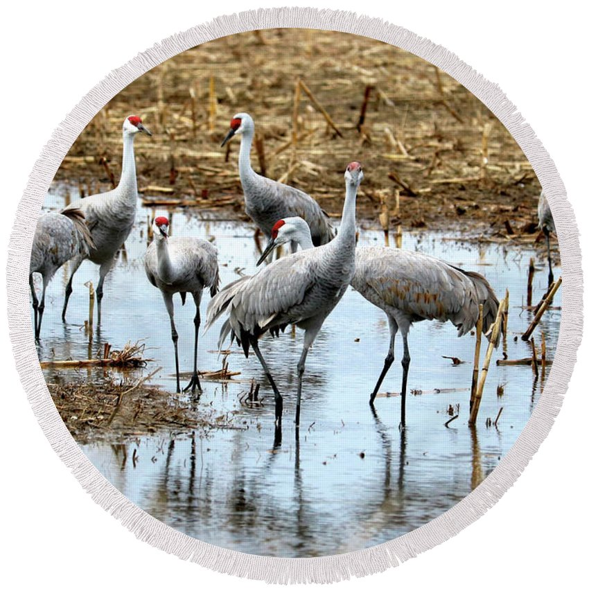 Sandhill Cranes Round Beach Towel featuring the photograph Sandhill Gang by Carol Groenen