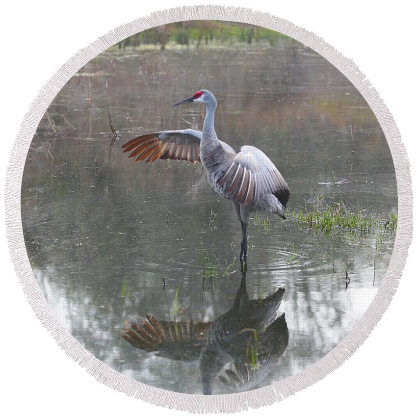 Sandhill Crane Round Beach Towel featuring the photograph Sandhill Morning Dip by Carol Groenen