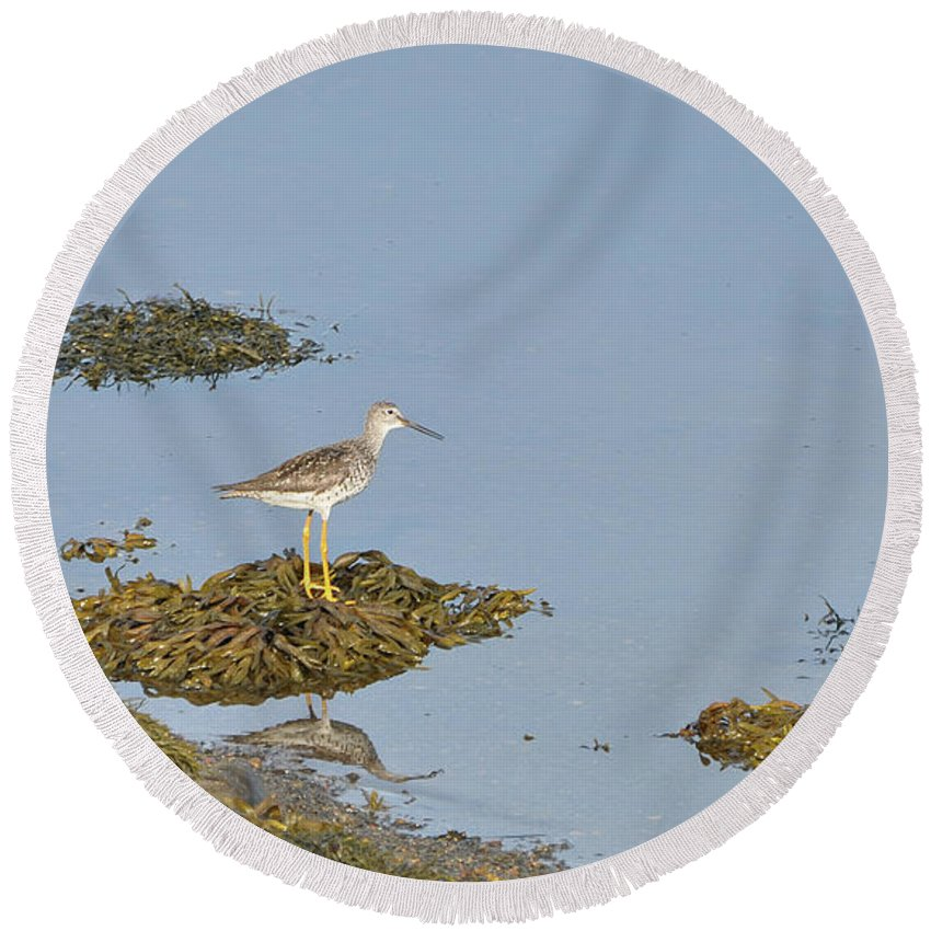 Sandpiper Round Beach Towel featuring the photograph Sandpiper On Stilts by Colleen English