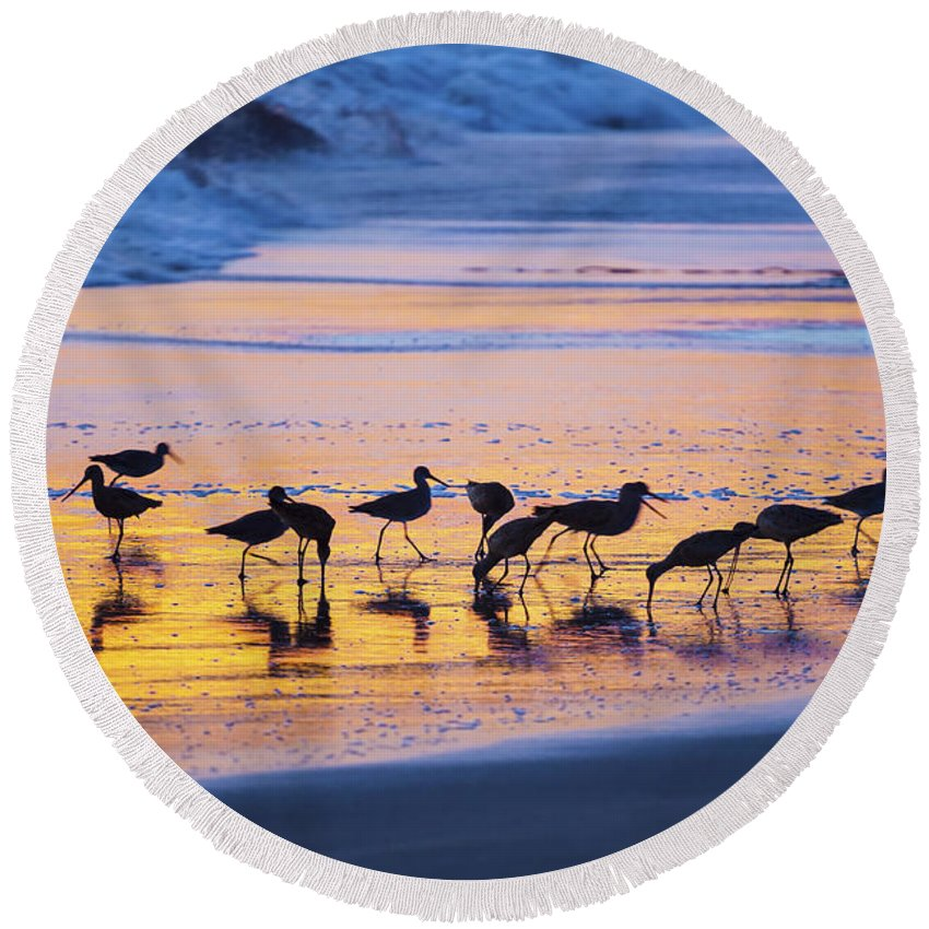 Group Round Beach Towel featuring the photograph Sandpipers In A Golden Pool Of Light by Sharon Foelz