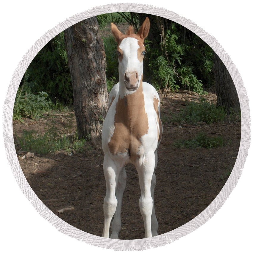 Horse Horses Colt Filly Mare Stallion Foal Ranch Farm Herd Paint Attitude Round Beach Towel featuring the photograph Sassy Filly by Andrea Lawrence