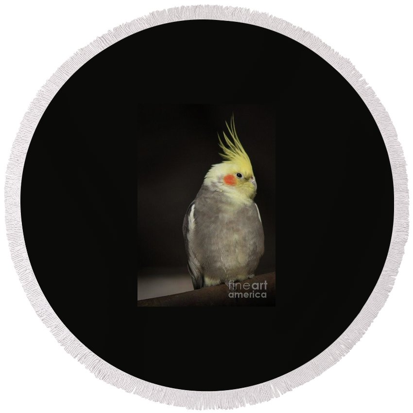 Bird Photographs Round Beach Towel featuring the photograph Sassy by Kim Henderson