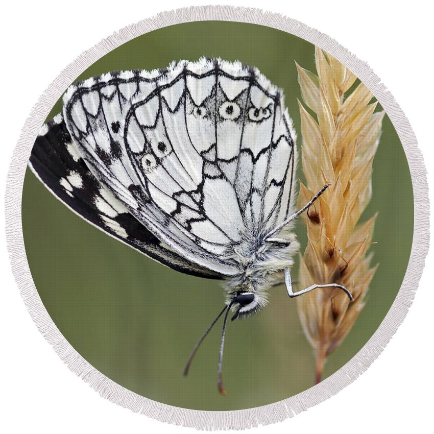 Insect Round Beach Towel featuring the photograph Satyr On The Grass by Michal Boubin