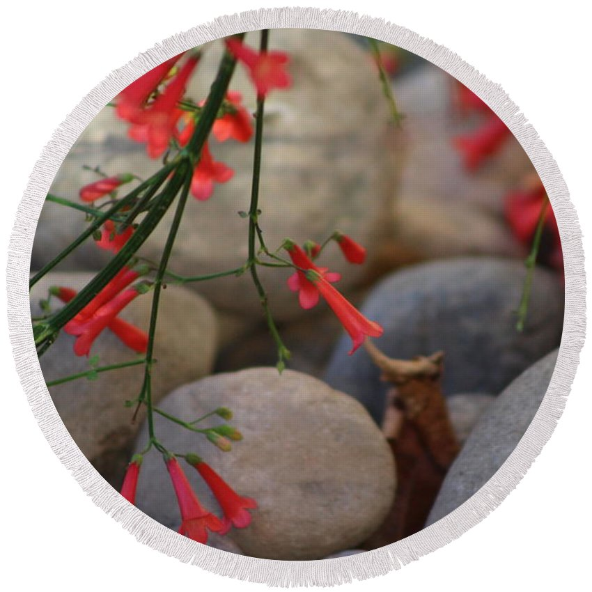 Scarlet Bugler Blossoms Round Beach Towel featuring the photograph Scarlet Bugler Blossoms on Rocks by Colleen Cornelius