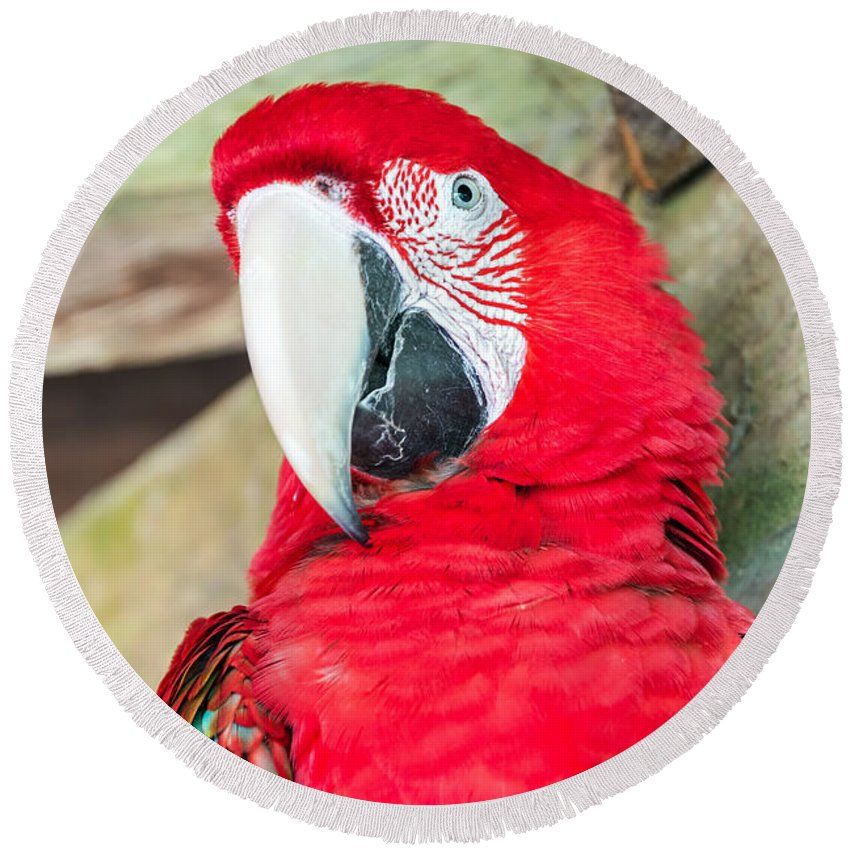 Macaw Round Beach Towel featuring the photograph Scarlet Macaw Face by Jess Kraft