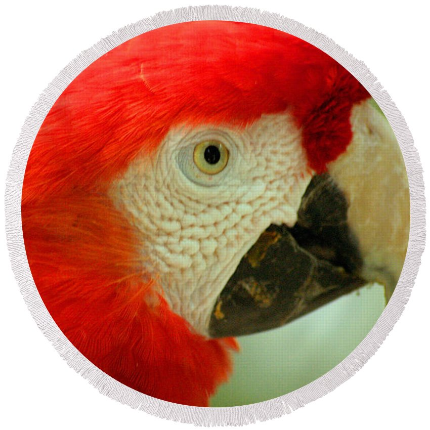 Parrot Round Beach Towel featuring the photograph Scarlett Macaw South America by Ralph A Ledergerber-Photography