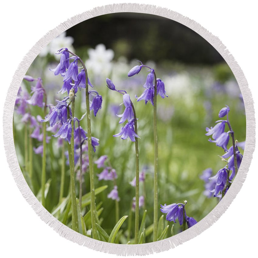 Flowers Round Beach Towel featuring the photograph Scottish Bluebells by Fran Gallogly