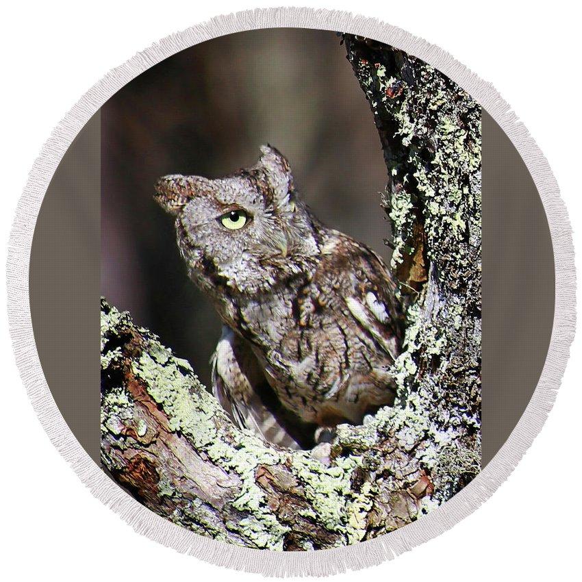 Screech Owl Round Beach Towel featuring the photograph Screech Owl by SC Shank
