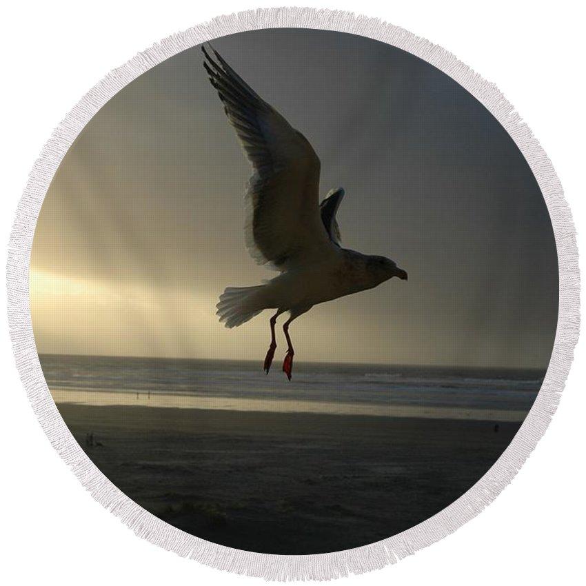 Seagull Round Beach Towel featuring the photograph Sea Bird 6 by Sara Stevenson