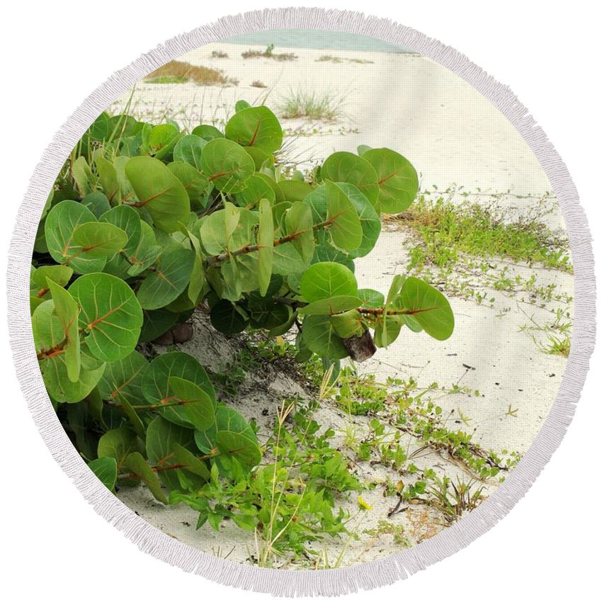 Florida Round Beach Towel featuring the photograph Sea Grapes by Ian MacDonald