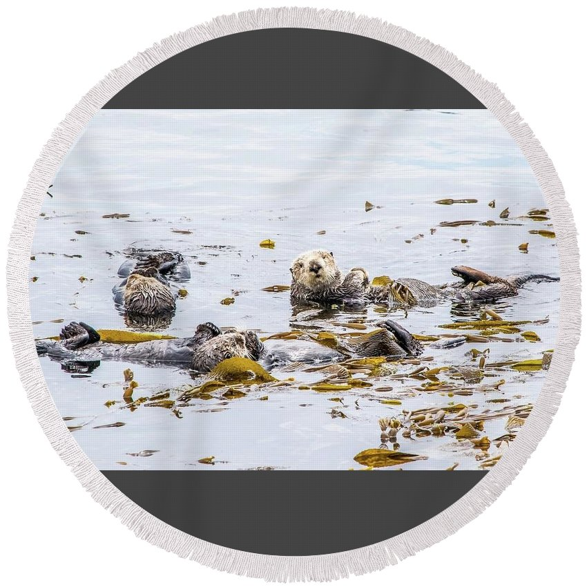 Otter Round Beach Towel featuring the photograph Sea Otter by Eric Strickland
