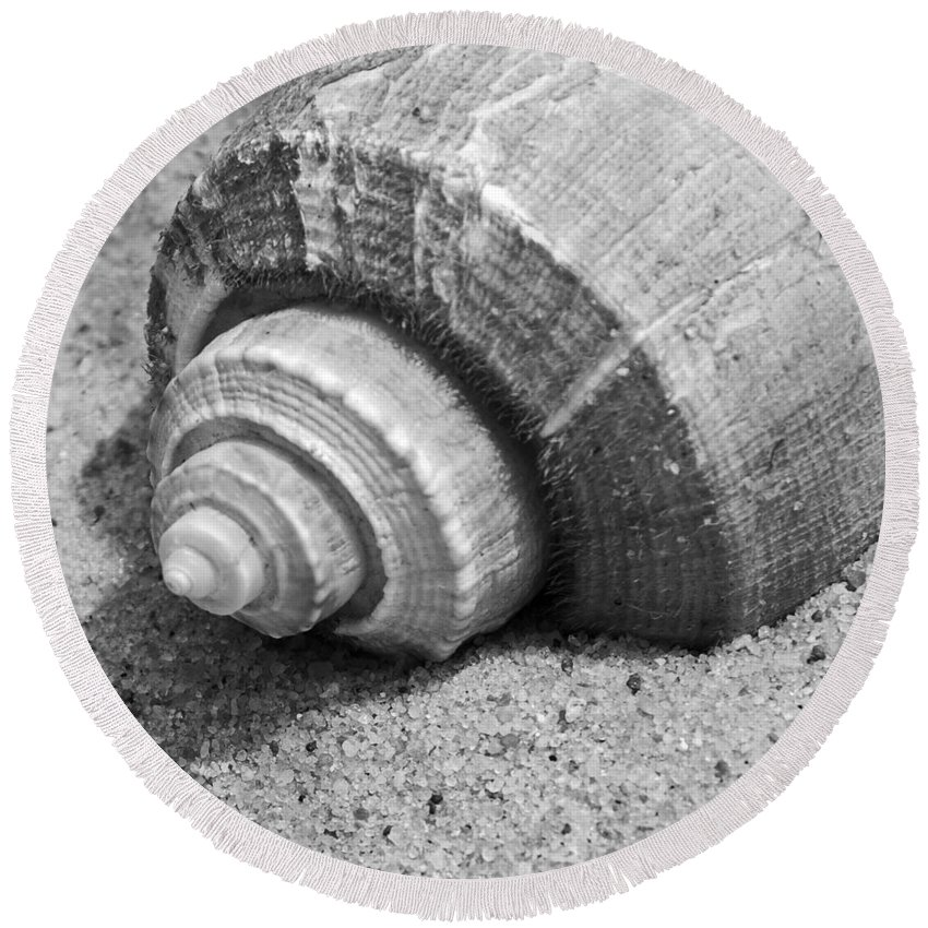 Conch Round Beach Towel featuring the photograph Sea Shell by Charles Harden