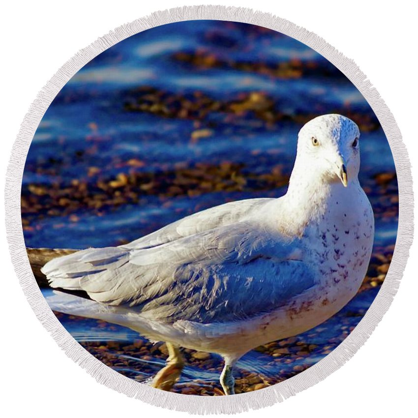 East Coast Round Beach Towel featuring the photograph Seagull 1 by Jasmin Hrnjic