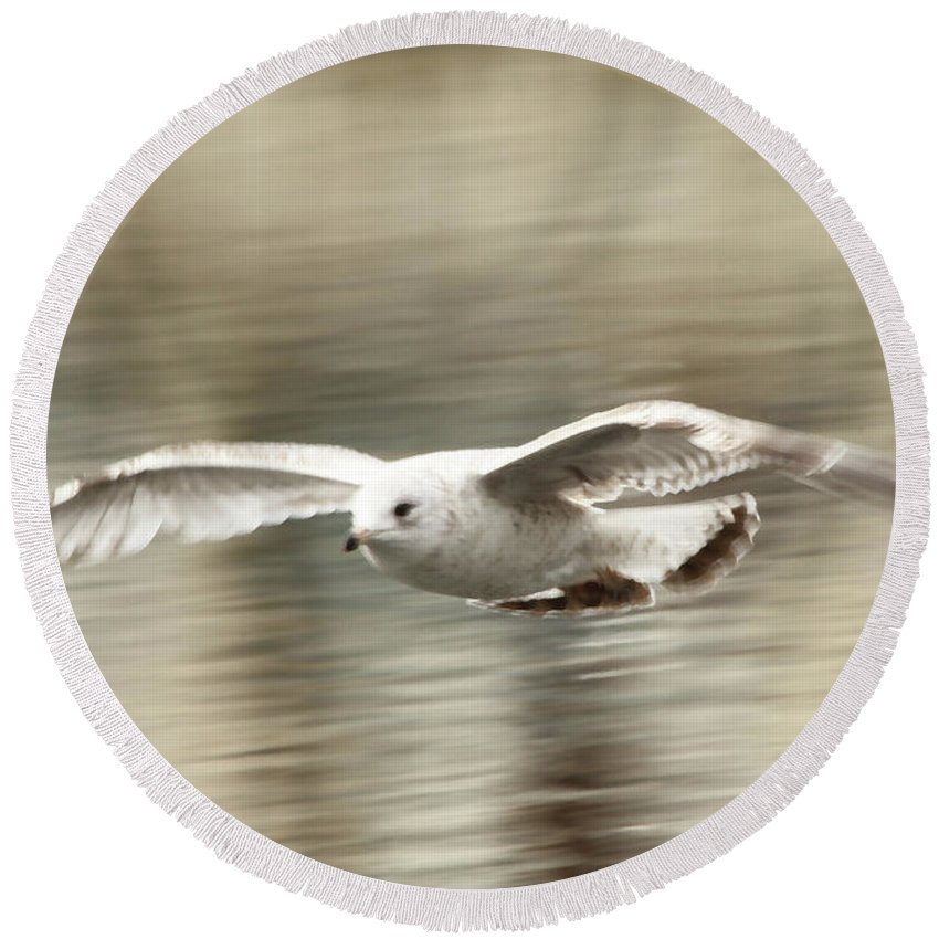 Seagull Round Beach Towel featuring the photograph Seagull Glide by Karol Livote