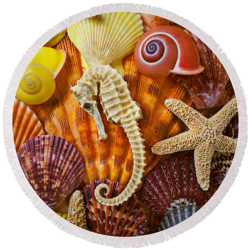Seahorses Round Beach Towel featuring the photograph Seahorse And Assorted Sea Shells by Garry Gay
