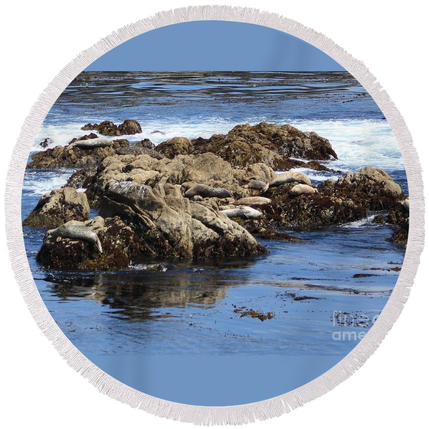 California Coast Round Beach Towel featuring the photograph Seal Island by Carol Groenen