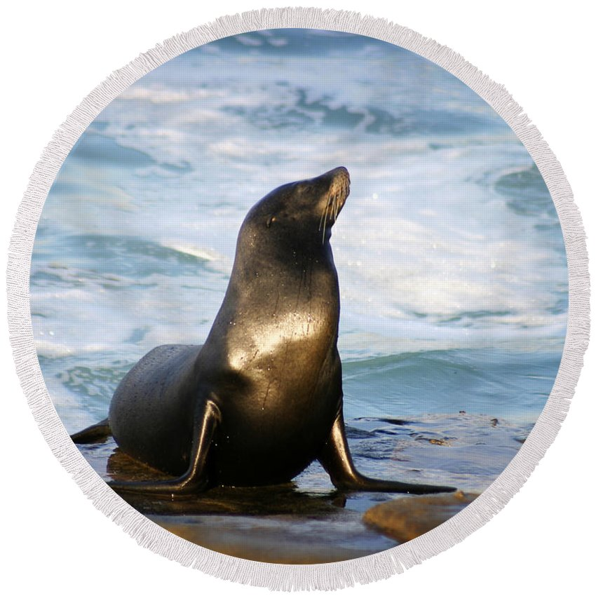 Sealion Round Beach Towel featuring the photograph Sealion by Anthony Jones