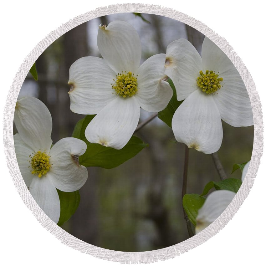 Flower Round Beach Towel featuring the photograph Season Of Dogwood by Andrei Shliakhau