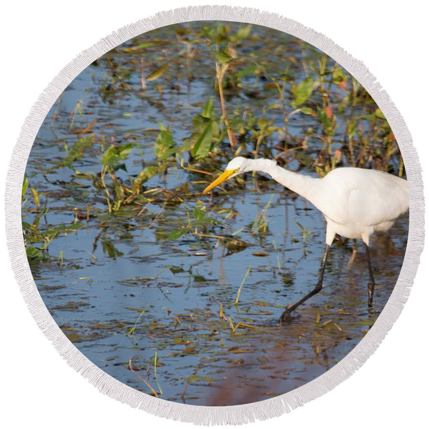 Great Egret Round Beach Towel featuring the photograph Sees It by Linda Kerkau