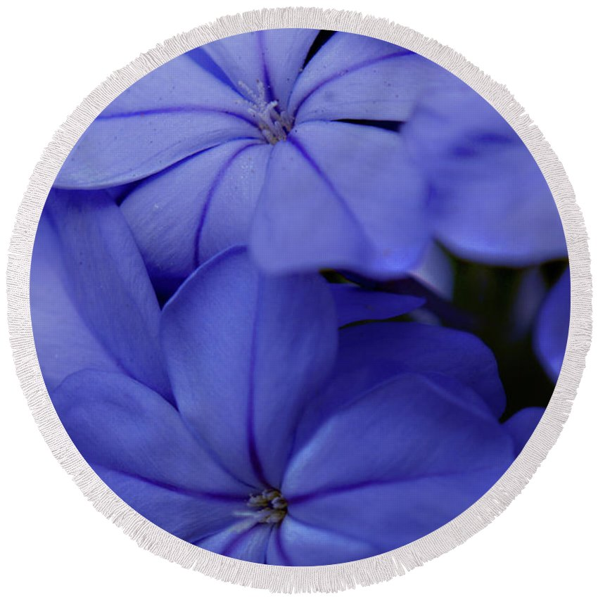 Plumbago Round Beach Towel featuring the photograph Shades Of Blue by Bob Johnson