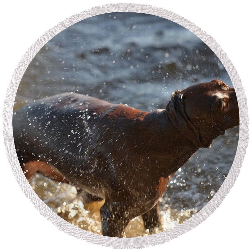 German Shorthaired Pointer Round Beach Towel featuring the photograph Shake by Tammy Mutka