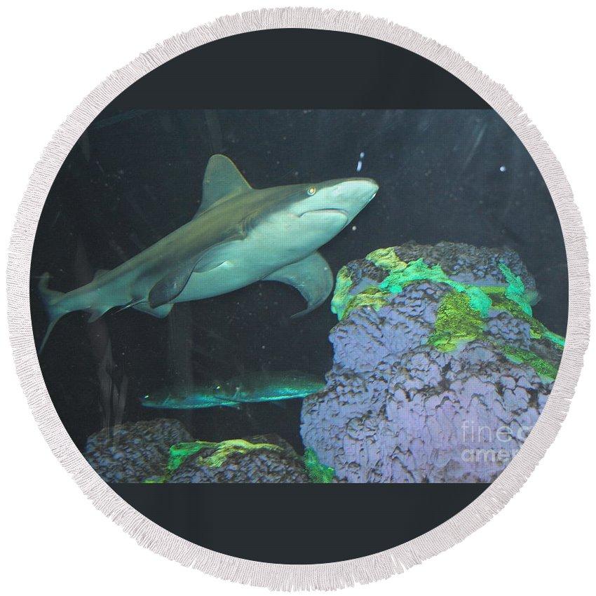 Shark Round Beach Towel featuring the photograph Shark by Jost Houk