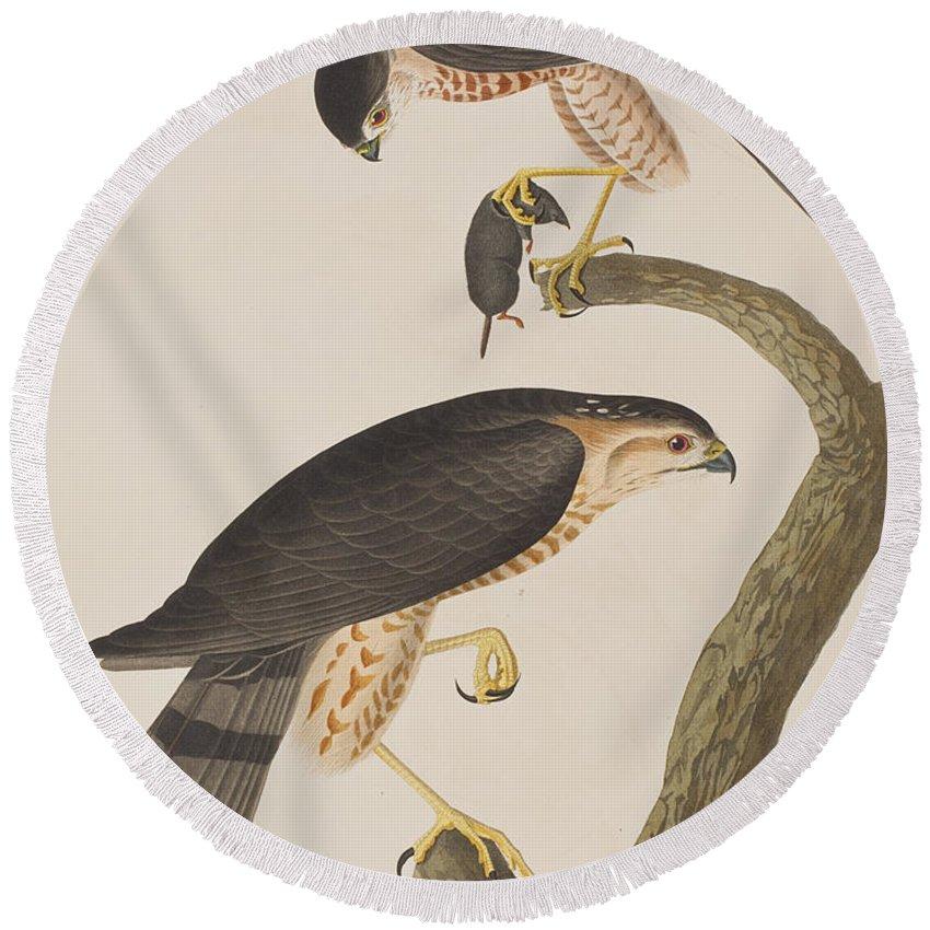 Hawks Round Beach Towel featuring the painting Sharp-shinned Hawk by John James Audubon