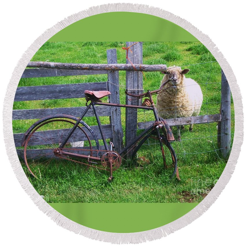 Photograph Sheep Bicycle Fence Grass Round Beach Towel featuring the photograph Sheep And Bicycle by Seon-Jeong Kim