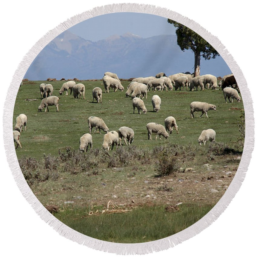 Sheep Round Beach Towel featuring the photograph Sheep Country by Jerry McElroy
