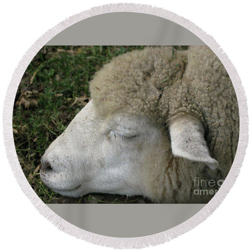 Sheep Round Beach Towel featuring the photograph Sheep Sleep by Ann Horn