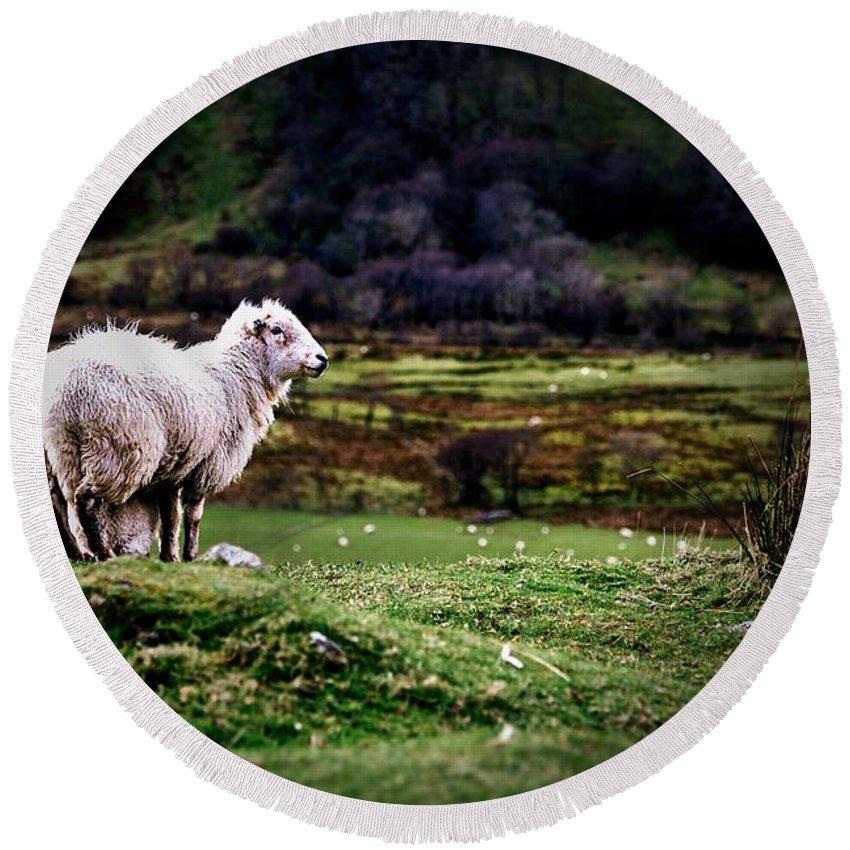Sheep Round Beach Towel featuring the photograph Sheep View by Dawn Van Doorn