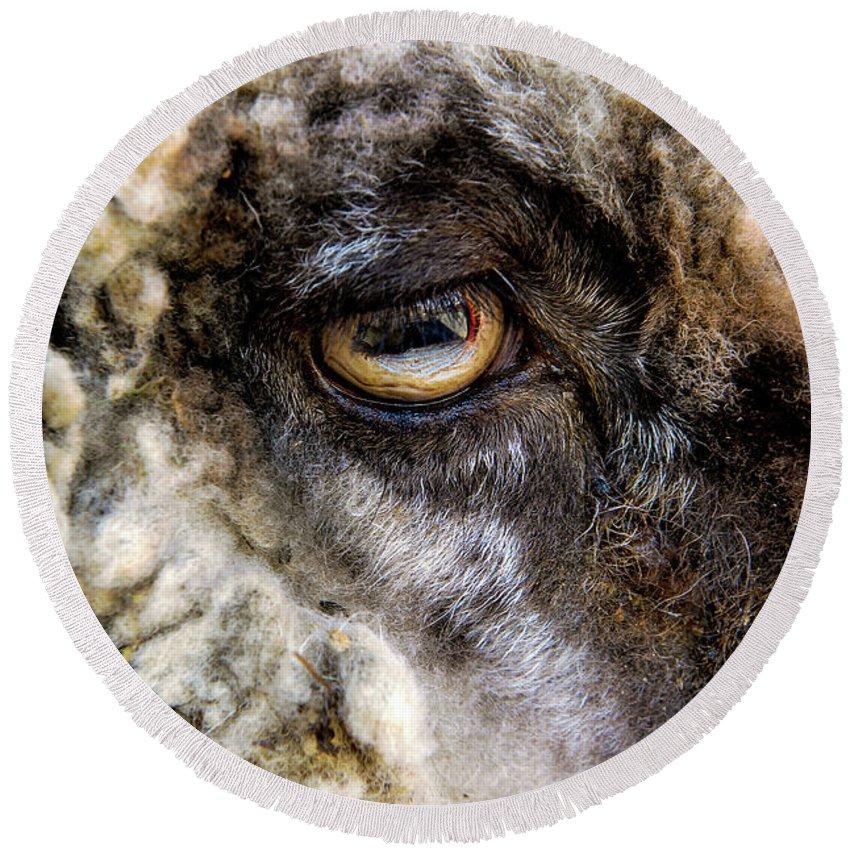 Sheep's Eye Round Beach Towel featuring the photograph Sheep's Eye by William Kauffman