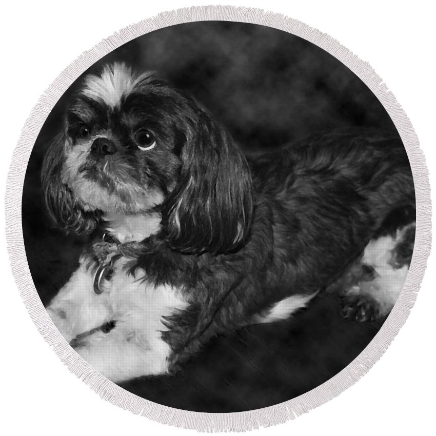 3scape Round Beach Towel featuring the painting Shih Tzu by Adam Romanowicz