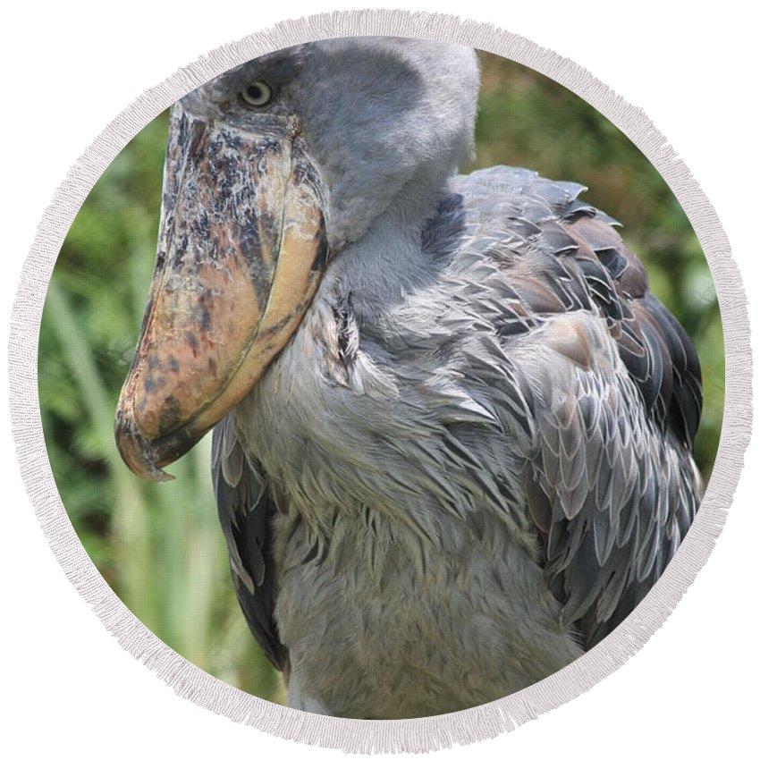 Bird Round Beach Towel featuring the photograph Shoebill Stork by Carol Groenen