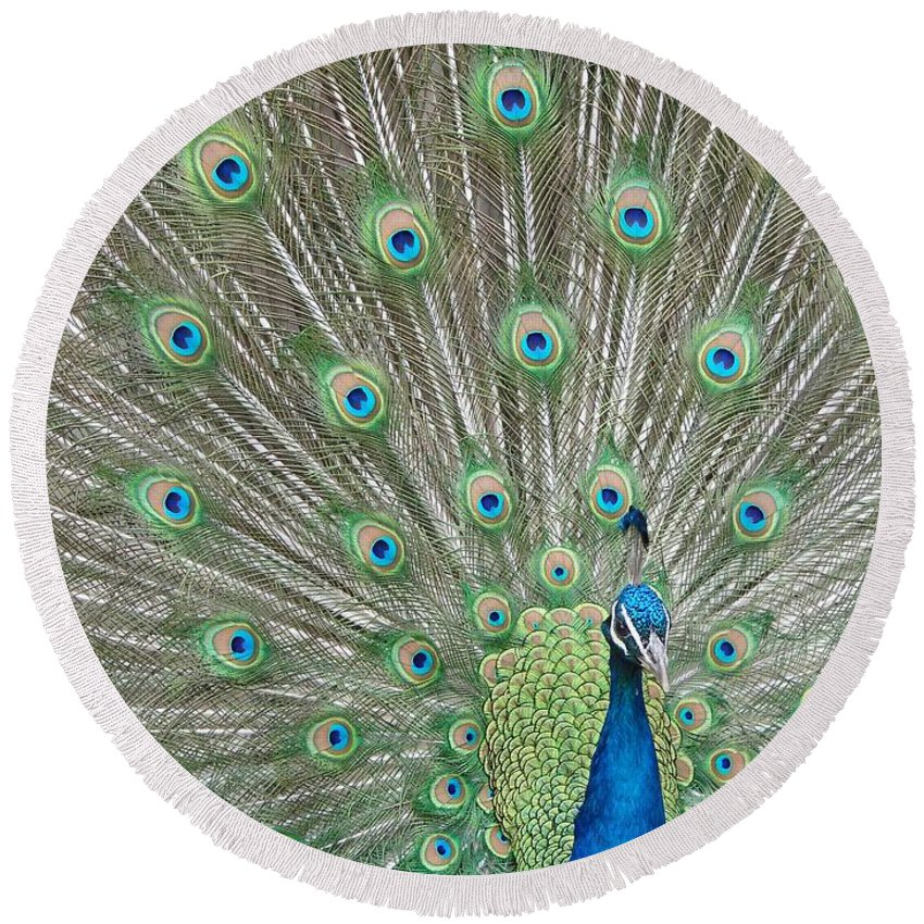 Peacock Round Beach Towel featuring the photograph Showing Off by Margaret Bobb