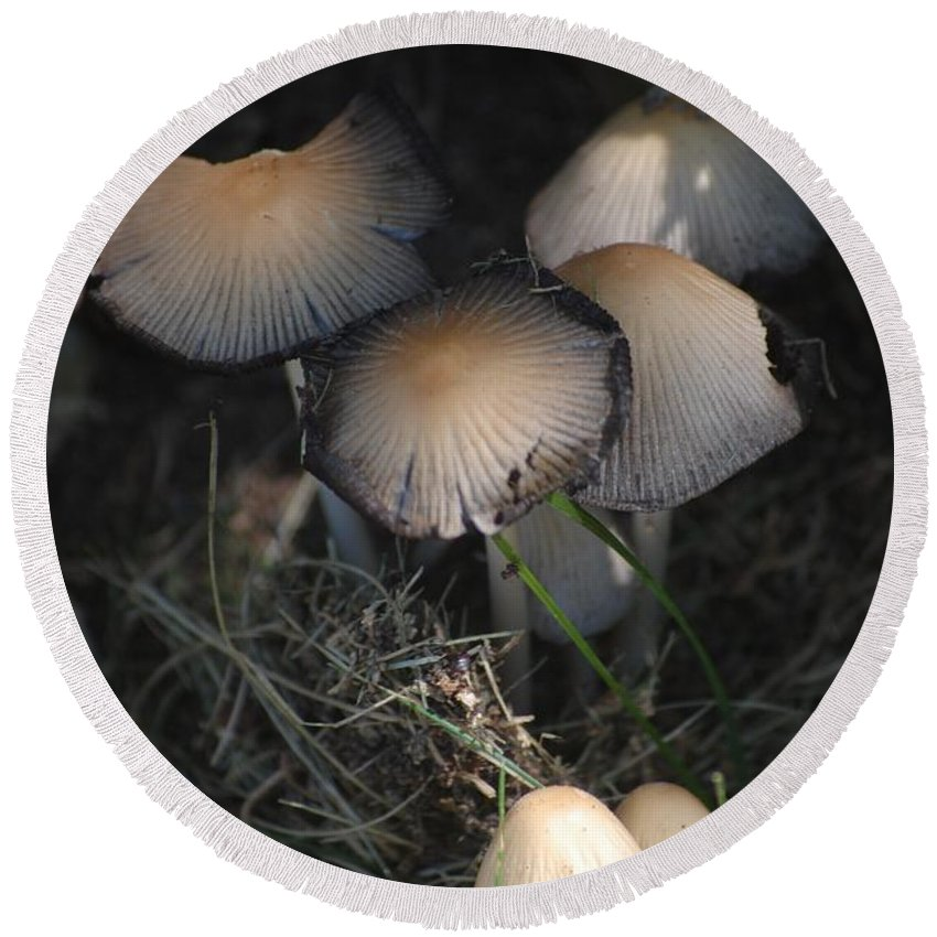 Digital Photograph Round Beach Towel featuring the photograph Shrooms 1 by David Lane