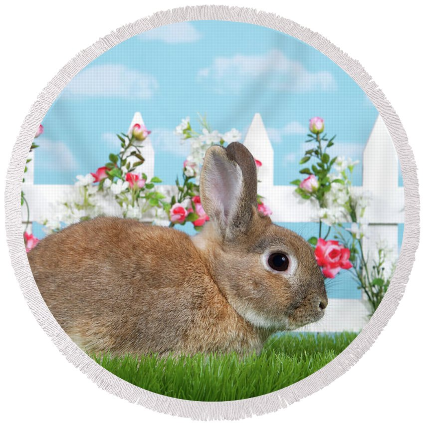 Easter Round Beach Towel featuring the photograph Shy Brown Dwarf Bunny Portrait by Sheila Fitzgerald