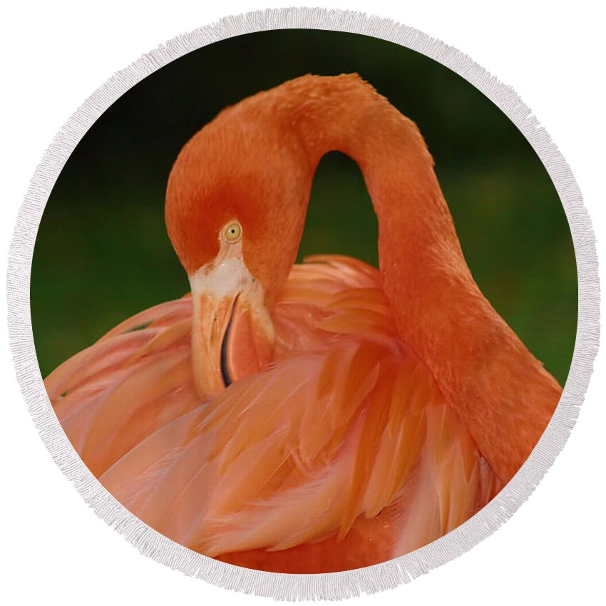 Flamingo Round Beach Towel featuring the photograph shy by Gaby Swanson