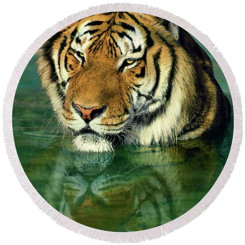 Siberian Tiger Round Beach Towel featuring the photograph Siberian Tiger Reflection Wildlife Rescue by Dave Welling