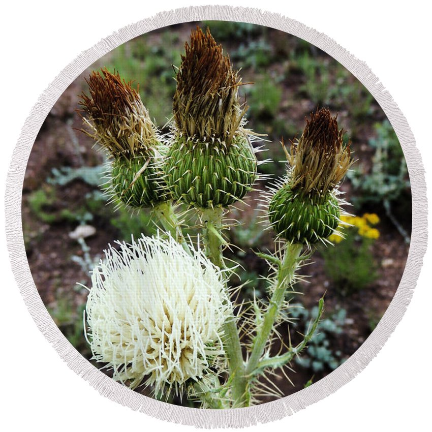 Blossom Round Beach Towel featuring the photograph Side Thistle by Grant Bolei