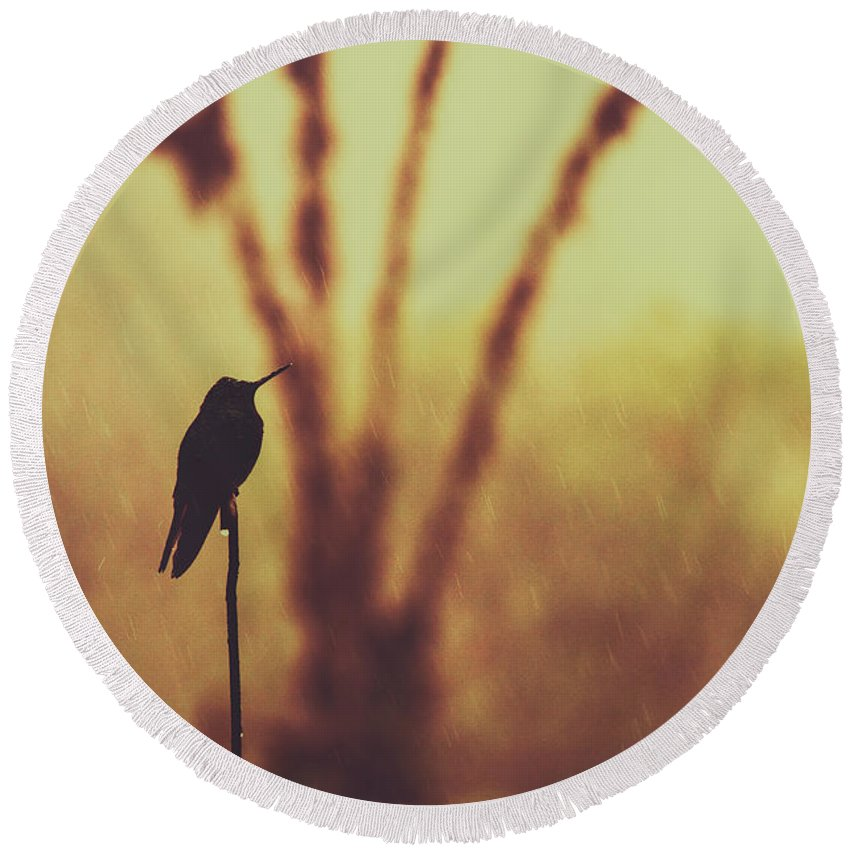 Agile Round Beach Towel featuring the photograph Silhouette Of A Hummingbird Against Golden Background, Mindo, Ecuador by Srdjan Kirtic