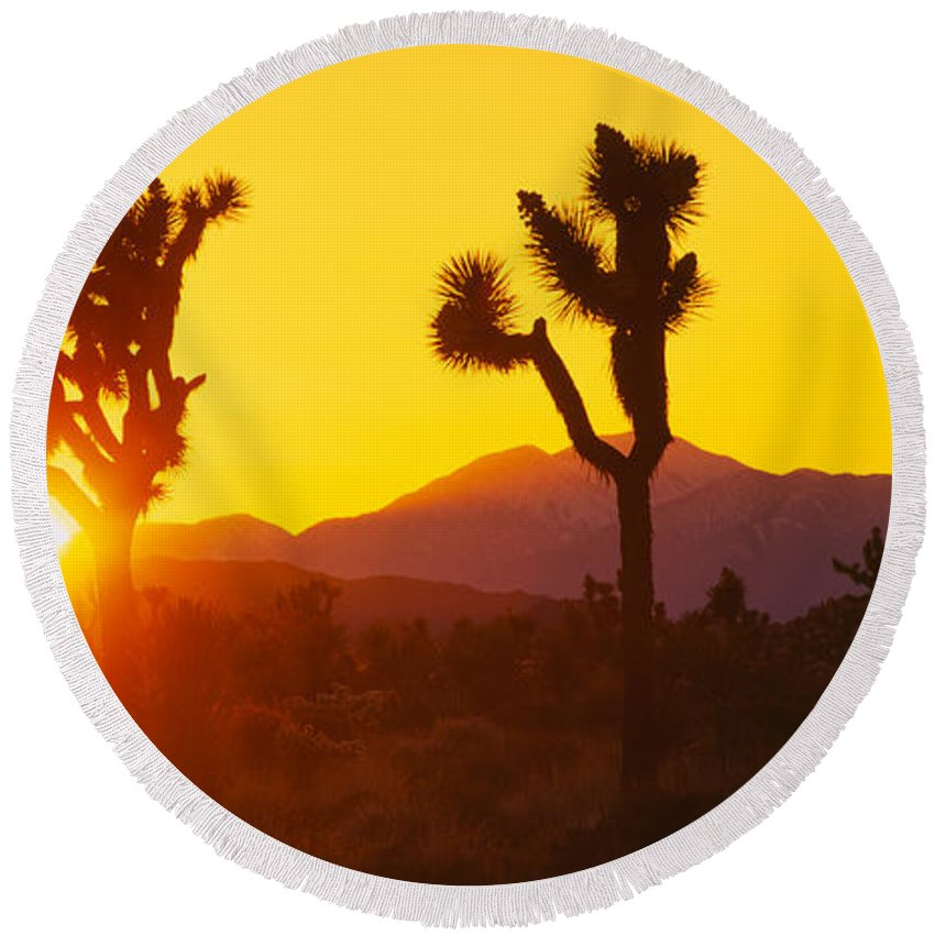 Photography Round Beach Towel featuring the photograph Silhouette Of Joshua Trees Yucca by Panoramic Images