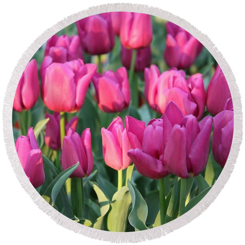 Pink Tulips Round Beach Towel featuring the photograph Silky Pink Tulips by Carol Groenen