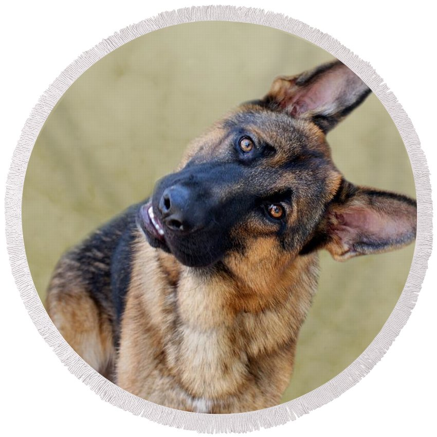 German Shepherd Round Beach Towel featuring the photograph Silly Boy by Sandy Keeton