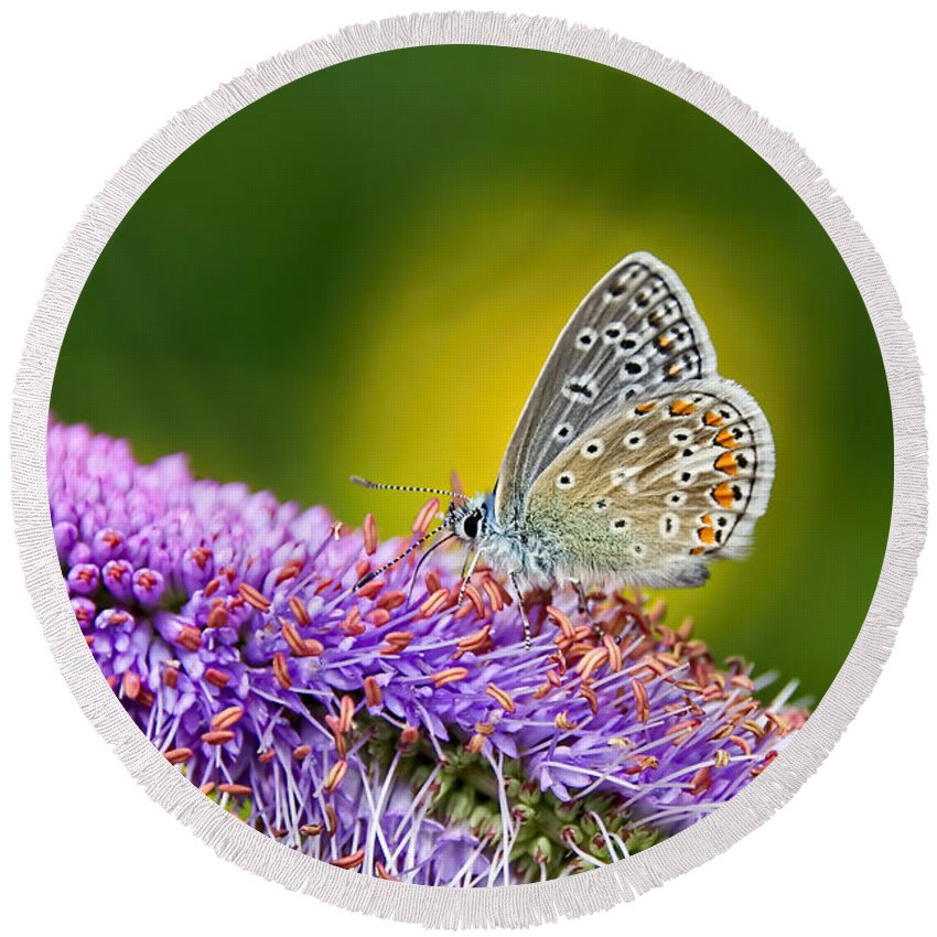 Silver-studded-blue Round Beach Towel featuring the photograph Silver-studded Blue Butterfly by Susie Peek