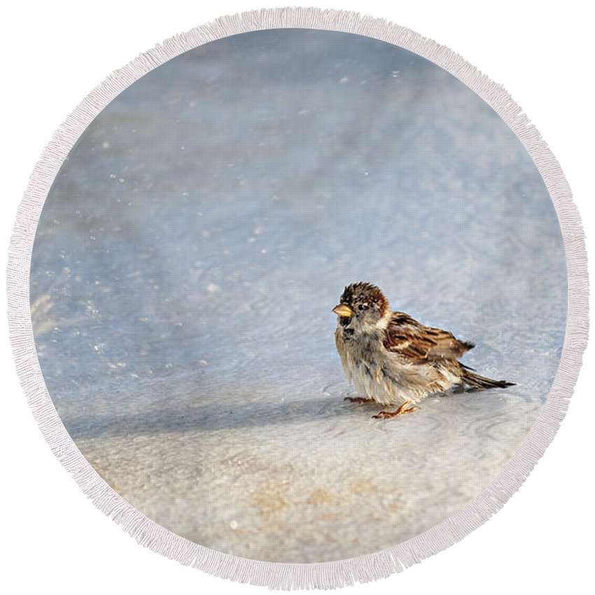 Sparrow Round Beach Towel featuring the photograph Singin In The Rain by Jill Love